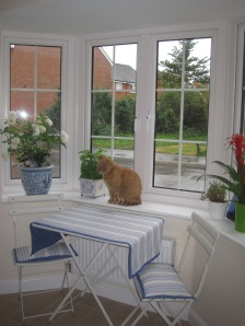 Our lovely bay window is the prime watch spot of the house, for Miss Marmalade!